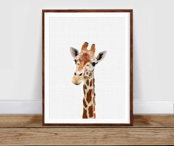 Giraffe gaze poster A3