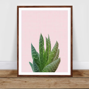 Succulent in pink poster A3