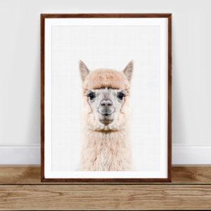 Luverly Llama